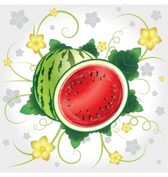 Watermelon whole and slices vector image vector image