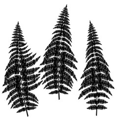 fern silhouettes on white background vector image