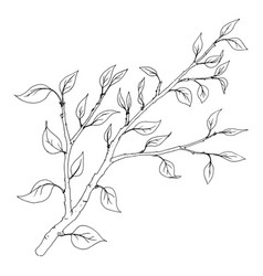 tree branch with leaves vector image