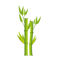 bamboo branch isolated icon vector image