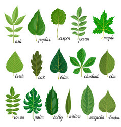 Set of tree leaves vector