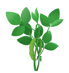 soybean plant green vector image