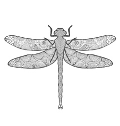 Dragonfly Animals Hand drawn doodle insect vector image vector image