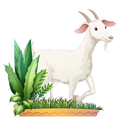 A white goat vector