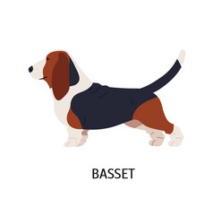 Basset hound cute funny hunting dog or scenthound vector