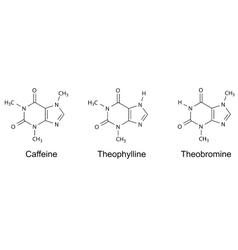 Caffeine theophylline theobromine vector