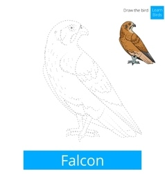 Falcon bird learn birds coloring book vector image