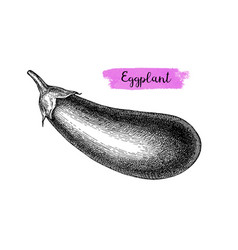 Ink sketch of eggplant isolated vector