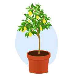 Lemon tree vector