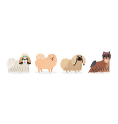 long hair decorative dogs isolated on white vector image