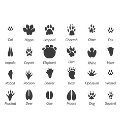 Wildlife animals footprints vector