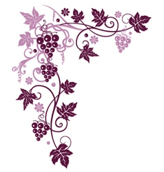 Vine with grapes vector