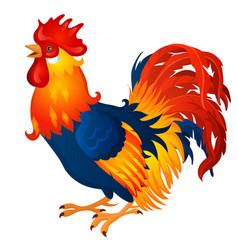 Animated brightly colored cock isolated on a white vector