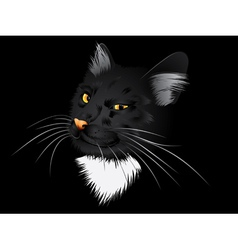 Black cat in the dark vector