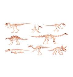Dinosaur skeleton dino bones with skulls vector