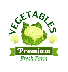 Fresh vegetables badge with cauliflower cabbage vector image