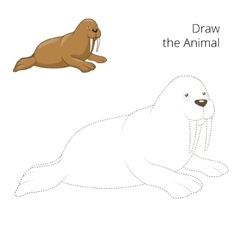 Learn to draw animal walrus vector image