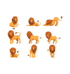 proud powerful lion character in different actions vector image