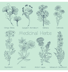 Set of medical herbs vector