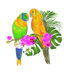 Sun conure parrots tropical birds vector