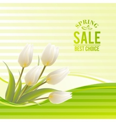White tulip spring flowers bouquet for sale vector image