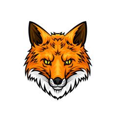 fox head muzzle or snout mascot icon vector image