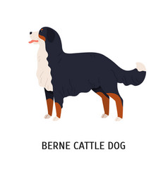bernese cattle dog or berner sennenhund gorgeous vector image