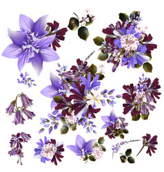 Collection or set of realistic field flowers vector
