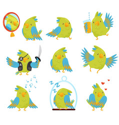 flat set of parrot in different situations vector image