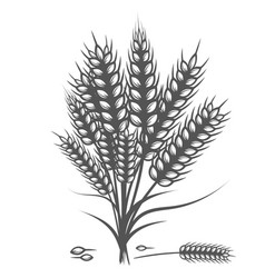 Wheat bread ears cereal crop sketch hand drawn vector