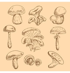 Isolated forest mushrooms sketches set vector image vector image