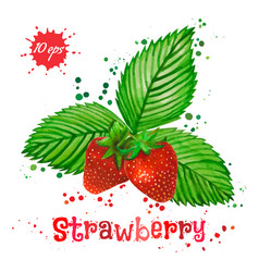 watercolor strawberry isolated on white background vector image vector image