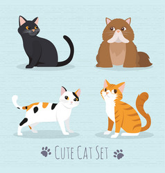 Cute cats breed vector