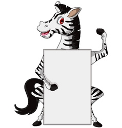 cute zebra cartoon with blank sign vector image