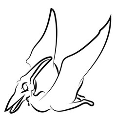 pteranodon drawing on white background vector image