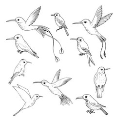set of hummingbirds vector image
