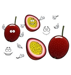 South american cartoon exotic passion fruits vector image