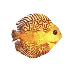 Watercolor tropic fish vector