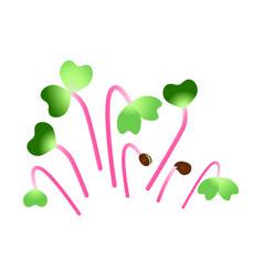 Microgreens hong vit radish bunch plants vector