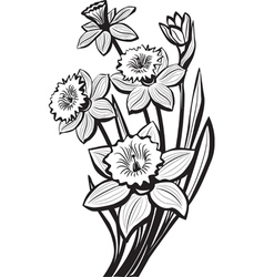 sketch of narcissus flowers vector image vector image