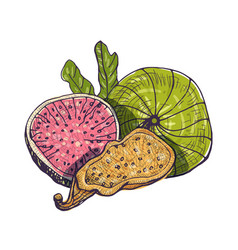 beautiful drawing of delicious fresh and dried fig vector image