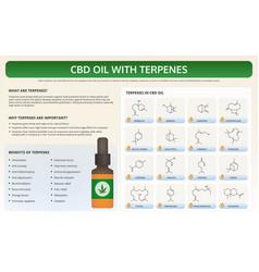 Cbd oil with terpenes horizontal textbook vector