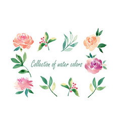 floral set colorful floral collection with vector image