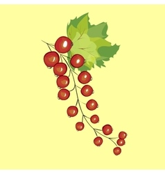 Red currant berries vector