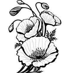 sketch of poppy flowers vector image