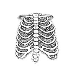 dotwork skeleton chest with key vector image vector image
