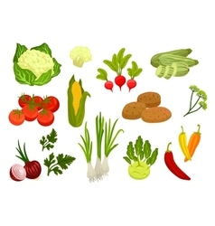 Farm vegetables isolated flat icons vector