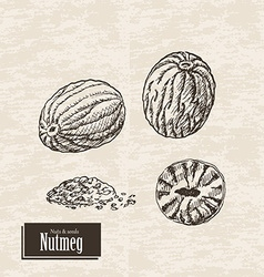 Background with nutmeg vector
