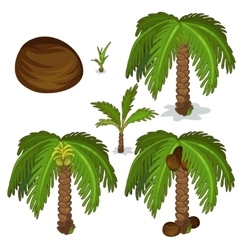 Planting and cultivation of coconut palm vector image
