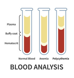Blood analysis infographic vector